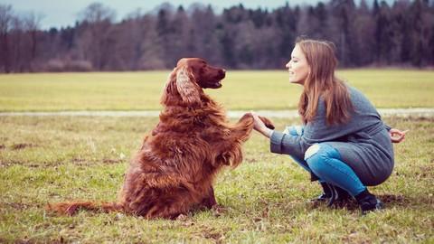 Adiestramiento Canino desde Cero, para ti y tu mejor amigo