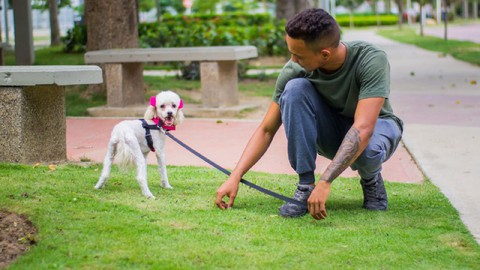 Adiestramiento Canino. Entrenamiento físico Canino