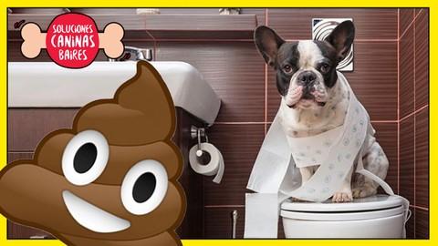 Adiestramiento canino: Resolver problemas de necesidades.