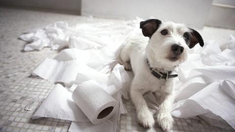 Ansiedad por separación en perros - La guía definitiva