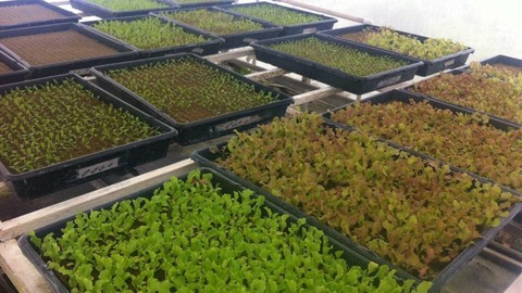 Aprende a Cultivar con Hidroponia