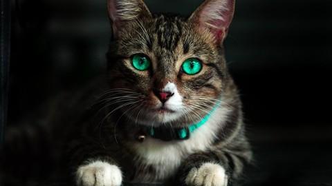 Aromaterapia Veterinaria - Aceites Esenciales en el Gato