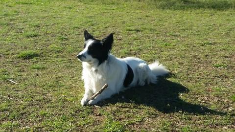Aromaterapia Veterinaria - Aceites Esenciales en el Perro