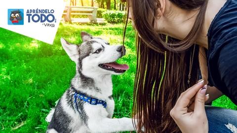 Cómo Educar A Tu Perro Y Ser Feliz Con Él Sin Estrés.