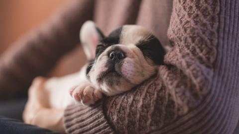 Conoce a tu cachorro y sus necesidades