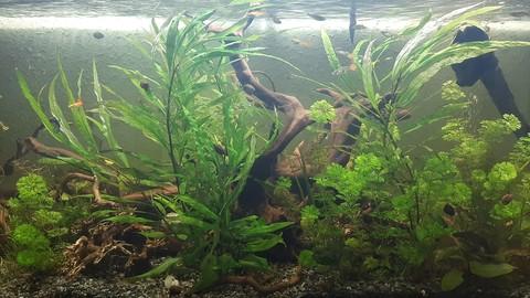 Creación e instalación de un acuario paso por paso