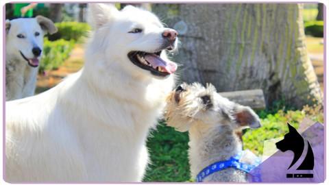 Curso Básico de Educación Canina - LineUp Dog