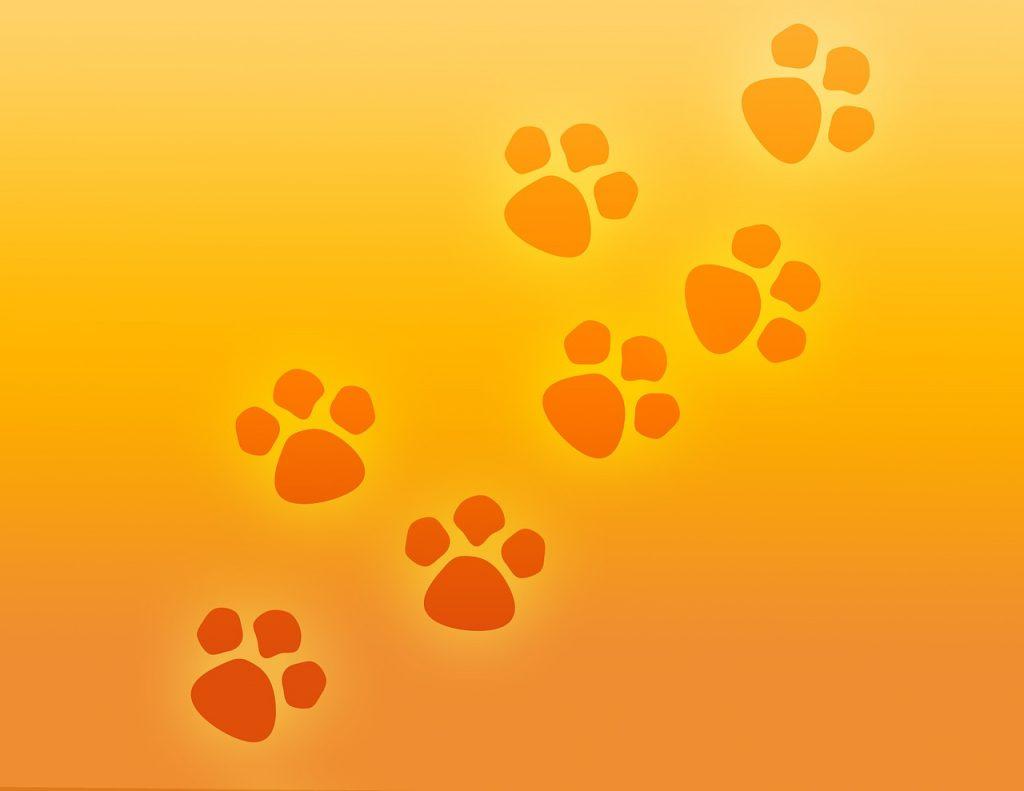 cursos en linea de veterinaria