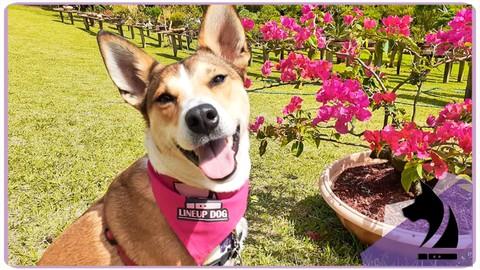 Educando a Tu Perro en Casa - La guía definitiva para tener una mascota obediente y feliz como siempre soñaste