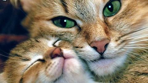 Guía completa que te ayudará saber todo sobre los gatos