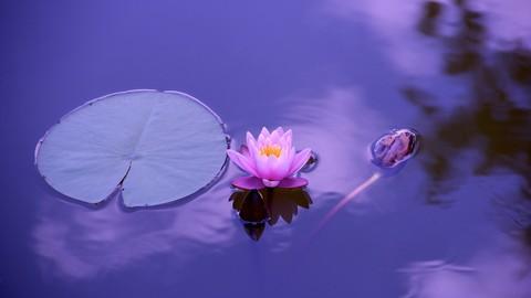 La práctica de la mente serena. Más allá del mindfulness. 1.