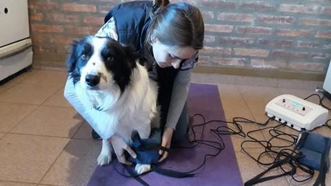 Magnetoterapia Veterinaria - Fisioterapia en el perro y gato