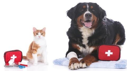 Primeros socorros para perros y gatos