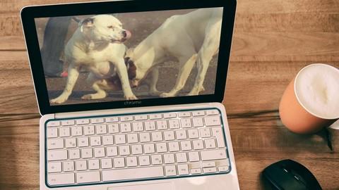 Señales de Calma: la clave del adiestramiento canino